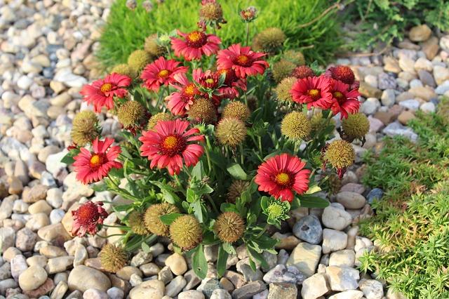 zahradní rostlina
